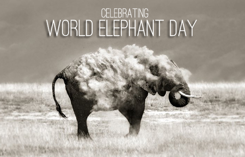 world elephant day 2018, when is world elephant day 2017, world elephant day celebrated, world elephant day 2017 theme, world elephant day 2018 theme, world elephant day in india, national elephant day 2018, world elephant day 2019