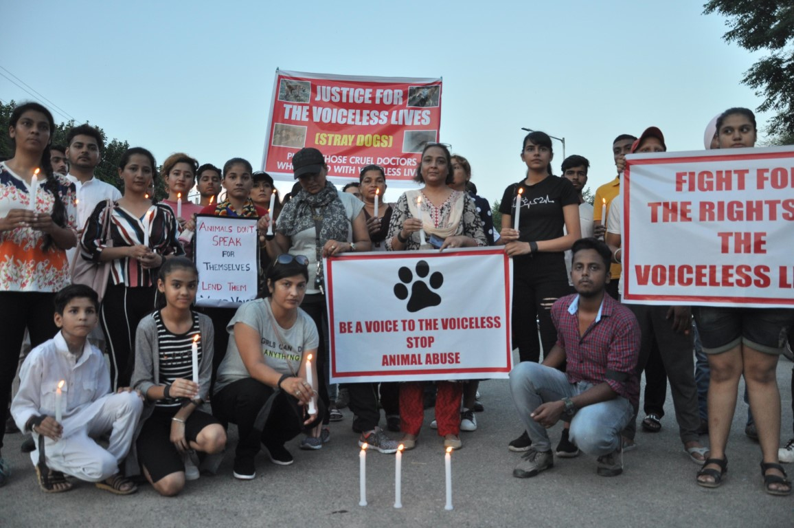 Candle march draws attention towards the plight of stray dogs