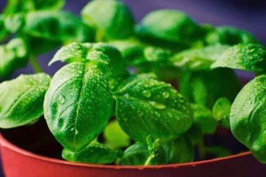 Good Metabolism help for weight loss: Dr. Malini Dahiya Clinical Dietitian