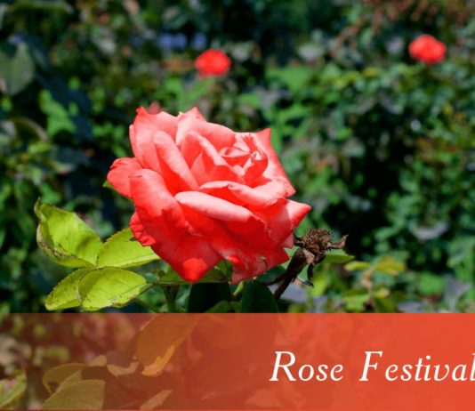 Rose Festival Chandigarh 2020