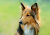 How To Cure Common Dog Skin Allergies?