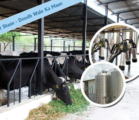 Haryana Dairy Development Cooperative Federation Ltd (HDDCF) has announced various schemes