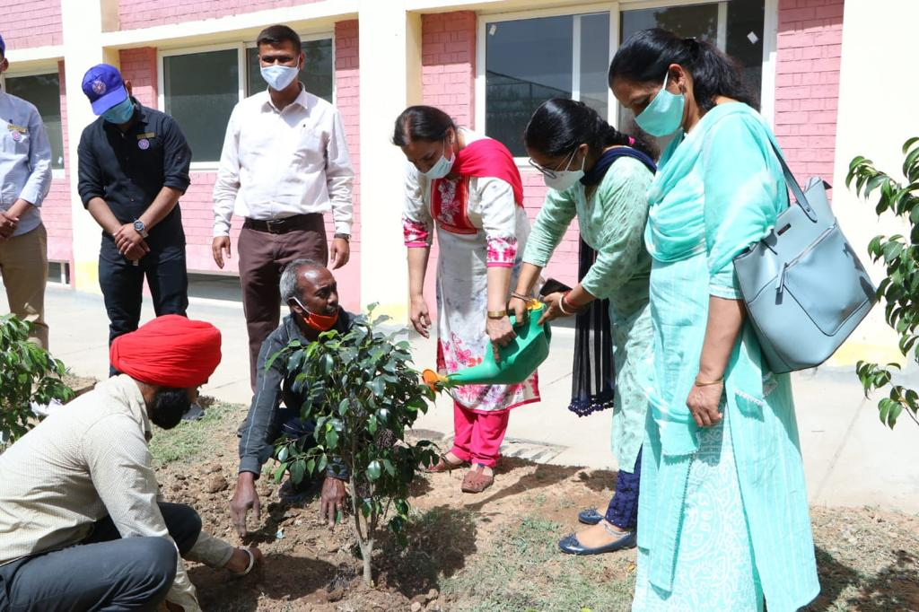 Tree Plantation Drive held on Forest Day