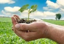 Follow These 10 Tips To Start Your Career In Agriculture