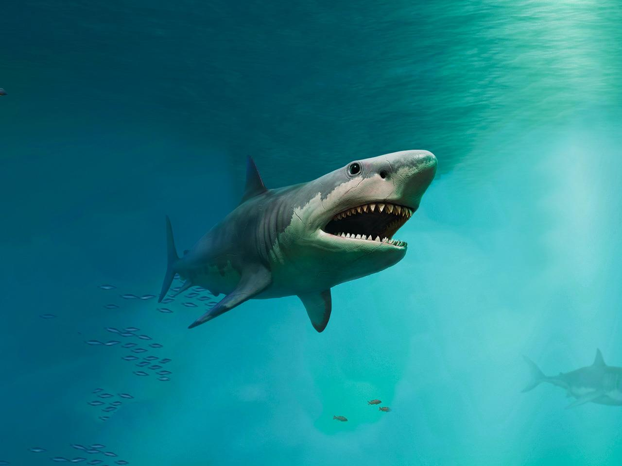 Giti and its Shark Tracking Project